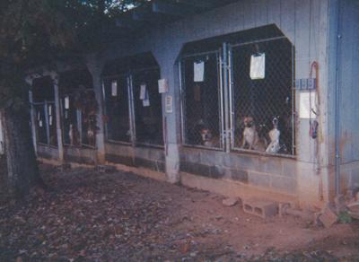 HSCC-Old-Shelter-2